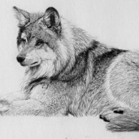 Fur Texture in Graphite